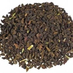 Arruda-da-Síria (Peganum harmala)